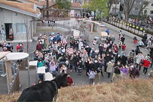 板橋区立こども動物園 本園分園の様子